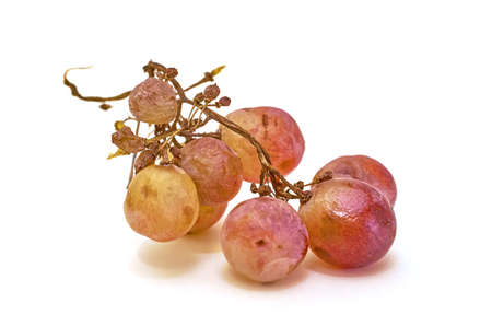 Spoiled bunch of grapes isolated on a white background, close-up