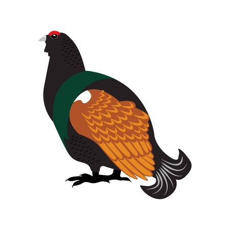Capercaillie bird flat icon on white background
