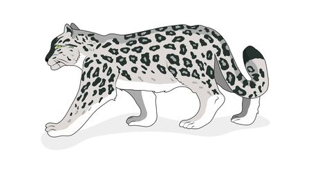 Snow Leopard. Isolated. Flat style Vector White background