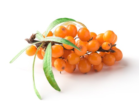 Sea-buckthorn isolated on white background. Fresh berries.