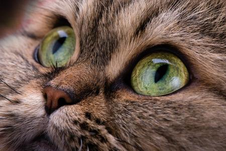 green eyes: Cat. Macro. Green eyes. Animal. Look. Angry.