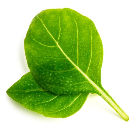 Two fresh basil leaf on white background with clipping path. Top view.