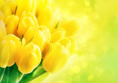 Yellow tulips on green background with bokeh. Beautiful yellow tulips close up. Easter border design. Copy space for your text. Valentines Day and Mothers Day background.