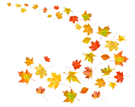 Falling leaves isolated on white background. Autumn background.