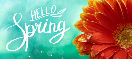 Beautiful red or orange flower with water drops on nature soft green background, macro. Hello Spring card design template, elegant amazing artistic image.