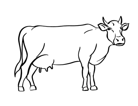 Sketch of cow drawn by hand. Livestock. Cattle. Animal grazing. Vector illustration.