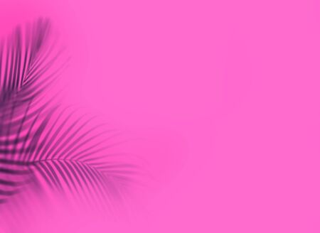 Leaves of palm tree on pink background. Tropical and coconut leaf.