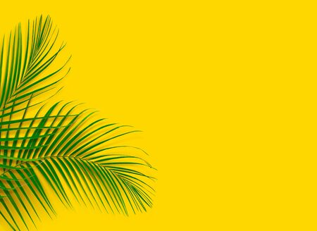 Green leaves of palm tree on yellow background. Tropical and coconut leaf.