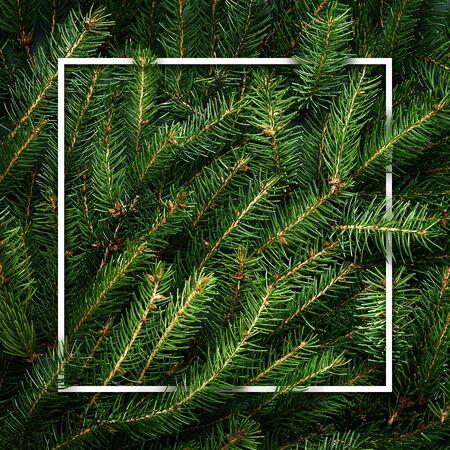 Christmas tree branches. Frame of green branch. Festive Xmas border