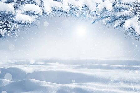 Winter Christmas scenic background with copy space. Morning Snow landscape with christmas branches covered with snow close-up, sunlight, snowdrifts and falling snow on nature outdoors, copy space, toned blue. Reklamní fotografie