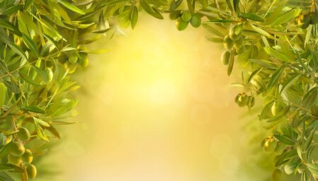 Beautiful background with olives at sunrise in garden. Olives branches on olive tree on yellow background. Stok Fotoğraf