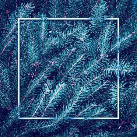 Christmas blue tree branches. Frame of green branch. Festive Xmas border Reklamní fotografie