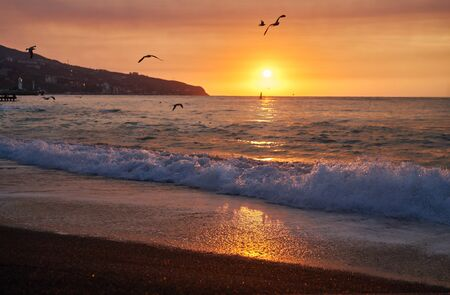 Beautiful view of beach with sea or ocean and seagulls in golden hour. Summer tropical landscape, panoramic view.