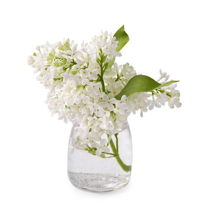 White lilac branches in a glass jar. Lilac flowers isolated on white background.