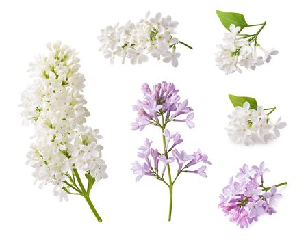 Set of blooming lilac. Branches of lilac flowers isolated on white background. Zdjęcie Seryjne - 138374758