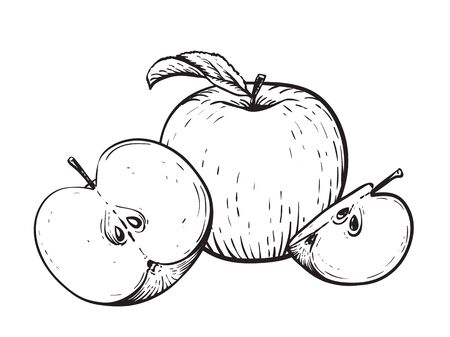 Engraved vector illustration of an apples with apple half and apple leaf. Vintage. Hand realistic drawing.