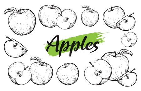 Apple fruit vector set. Engraved vector illustration of black white apples. Vintage. Hand realistic drawing.