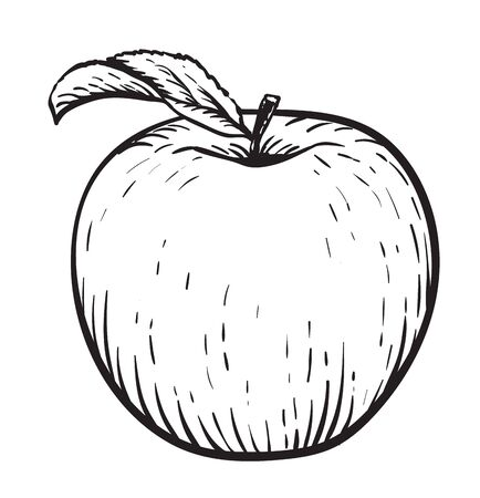 Apple with leaf. Vintage. Hand realistic drawing. Engraving style vector illustration. Zdjęcie Seryjne - 140306214
