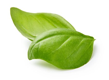 Two basil leaves isolated on white background