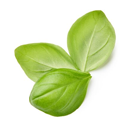 Three basil leaves isolated on white background. Top view of fresh basil leaves.
