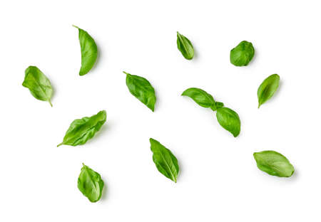Basil leaves isolated on white background. Top view of basil.