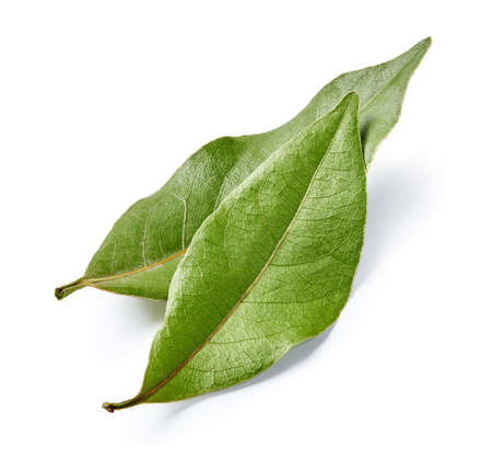 Two bay leaves isolated on white background. Macro.