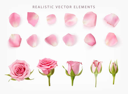 Realistic vector elements set of pink roses. Pink petals of rose flower, bud and an open flower isolated on white.