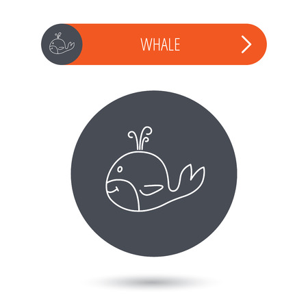 cetacea: Whale icon. Largest mammal animal sign. Baleen whale with fountain symbol. Gray flat circle button. Orange button with arrow. Vector Illustration