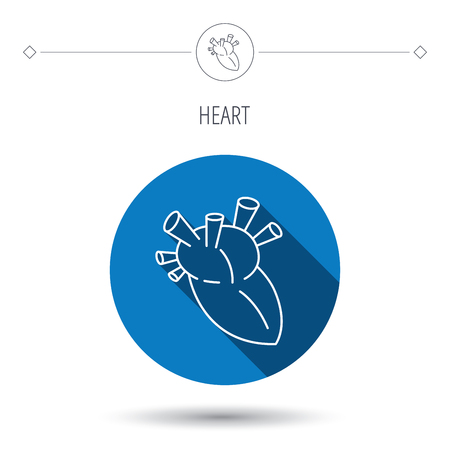 transplantation: Heart icon. Human organ sign. Surgical transplantation symbol. Blue flat circle button. Linear icon with shadow. Vector