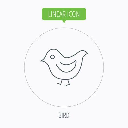 fowl: Bird icon. Chick with beak sign. Fowl with wings symbol. Linear outline circle button. Vector