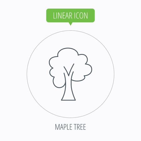 coma: Maple tree icon. Forest wood sign. Nature environment symbol. Linear outline circle button. Vector