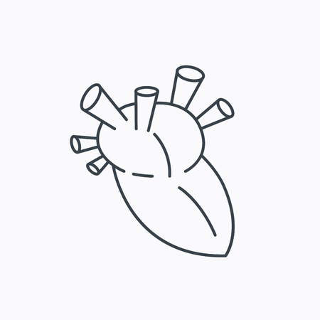transplantation: Heart icon. Human organ sign. Surgical transplantation symbol. Linear outline icon on white background. Vector