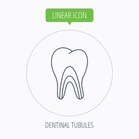 tubules: Dentinal tubules icon. Tooth medicine sign. Linear outline circle button. Vector