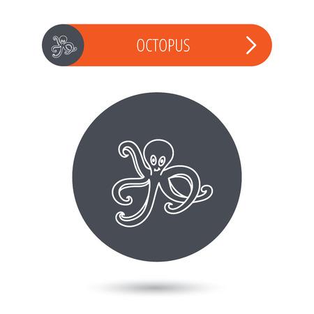 devilfish: Octopus icon. Ocean devilfish sign. Gray flat circle button. Orange button with arrow. Vector