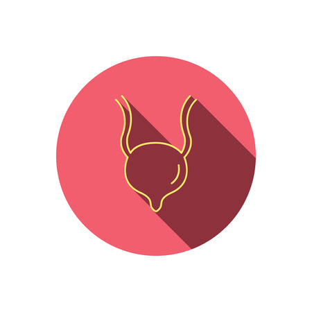 urology: Urinary bladder icon. Human body organ sign. Urology health symbol. Red flat circle button. Linear icon with shadow. Vector