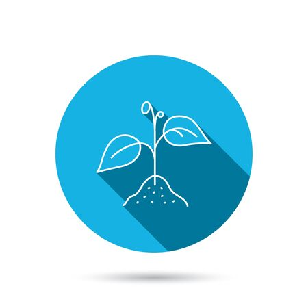 blue icon: Plant with leaves icon. Agricultural or gardening sign symbol. Blue flat circle button with shadow. Vector Illustration