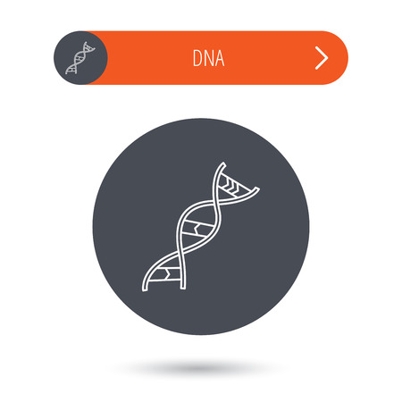 genetic: DNA icon. Genetic evolution structure sign. Biology science symbol. Gray flat circle button. Orange button with arrow. Vector