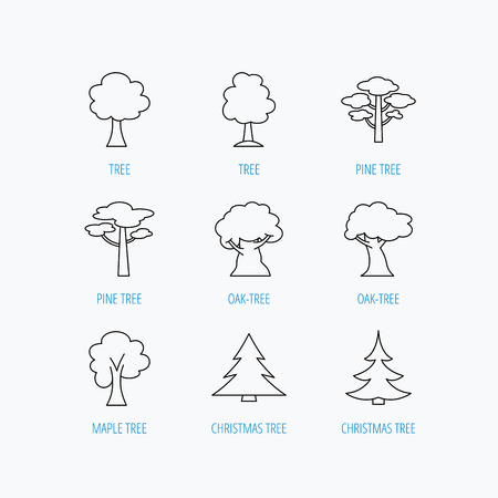 bosk: Pine tree, maple and oak icons. Christmas trees linear signs. Forest trees flat line icons. Linear set icons on white background. Vectores