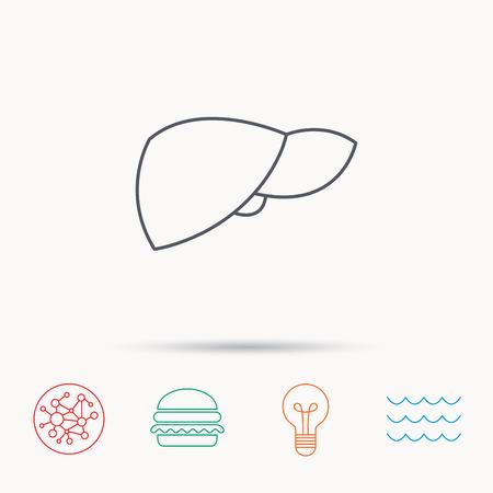 liver failure: Liver icon. Transplantation organ sign. Medical hepathology symbol. Global connect network, ocean wave and burger icons. Lightbulb lamp symbol.