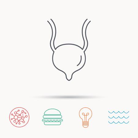 urology: Urinary bladder icon. Human body organ sign. Urology health symbol. Global connect network, ocean wave and burger icons. Lightbulb lamp symbol.