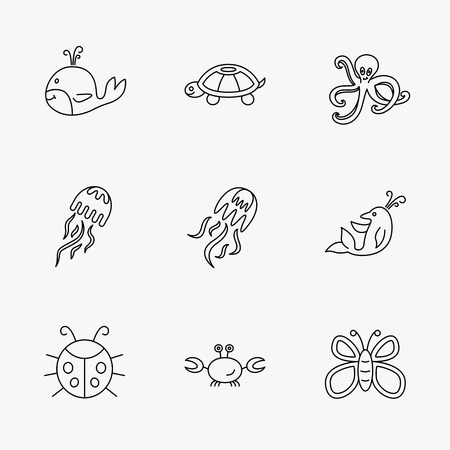 ladybug: Octopus, turtle and dolphin icons. Jellyfish, whale and ladybug linear signs. Crab, butterfly flat line icons. Linear black icons on white background. Illustration