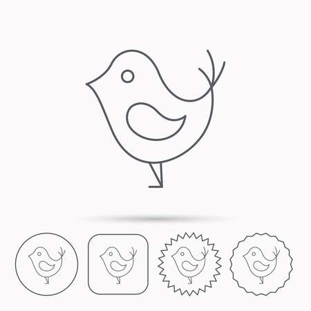beak: Bird with beak icon. Cute small fowl symbol. Social media concept sign. Linear circle, square and star buttons with icons.
