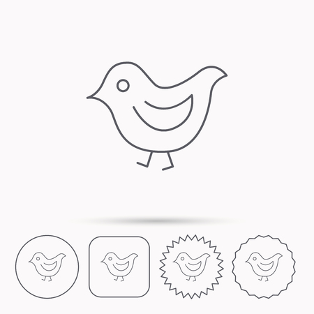 fowl: Bird icon. Chick with beak sign. Fowl with wings symbol. Linear circle, square and star buttons with icons. Illustration