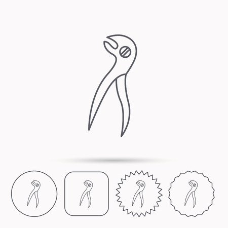 premolar: Dental pliers icon. Stomatological forceps tool sign. Linear circle, square and star buttons with icons.