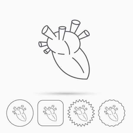 transplantation: Heart icon. Human organ sign. Surgical transplantation symbol. Linear circle, square and star buttons with icons. Illustration