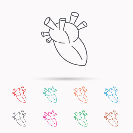 transplantation: Heart icon. Human organ sign. Surgical transplantation symbol. Linear icons on white background. Illustration