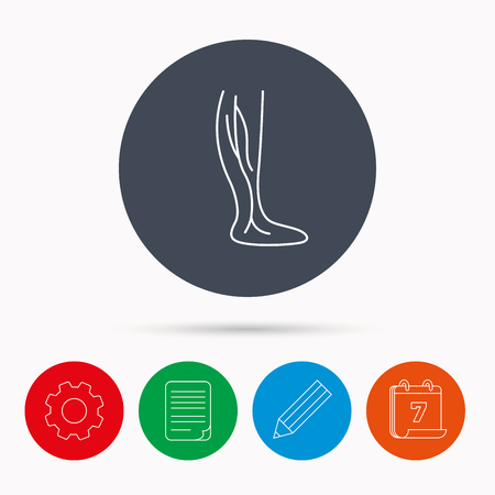 varicose veins: Phlebology icon. Leg veins sign. Varicose or thrombosis symbol. Calendar, cogwheel, document file and pencil icons.