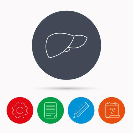 liver failure: Liver icon. Transplantation organ sign. Medical hepathology symbol. Calendar, cogwheel, document file and pencil icons. Illustration