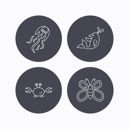 fondo para bebe: Medusas, cangrejos y delfines iconos. Mariposa lineales firmar. iconos planos de botones de c�rculo sobre fondo blanco. Vector