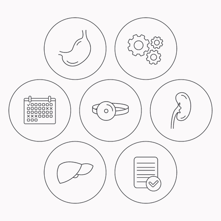 medical check: Kidney, liver and stomach organ icons. Medical mirror linear sign. Check file, calendar and cogwheel icons. Vector